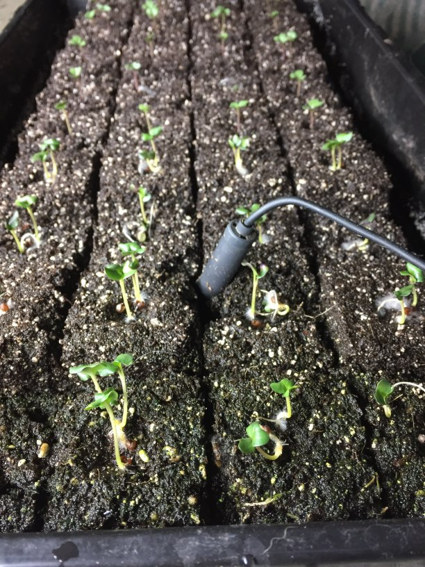 sprouting plants in soil